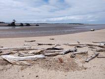 Oceanu Driftwood przy Oregon oceanside z plażą obraz stock