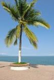 oceanu drzewko palmowe Fotografia Stock
