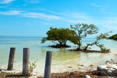 oceanu drzewo Zdjęcie Royalty Free