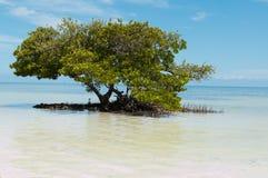 oceanu drzewo Obrazy Royalty Free