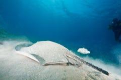 oceanu jeżatki promienia słońce Zdjęcia Stock