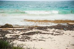 Oceanu klingeryt na brzeg fotografia royalty free