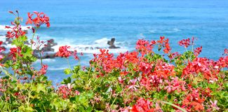 oceanu Porto Portugal widok Zdjęcia Royalty Free