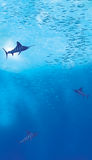 oceanu sceny underwater Zdjęcia Royalty Free