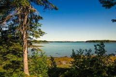 Oceanu wpust w góry Pustynnej wyspie, Maine fotografia royalty free