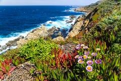 Oceanu wybrzeże z zieloną i czerwoną roślinnością Zdjęcie Stock