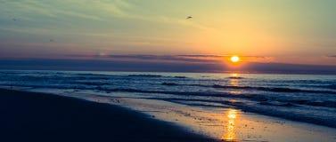 Oceanu zmierzch z latającymi seagulls lub wschód słońca Obrazy Royalty Free