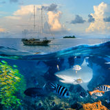 Oceanview yacht and bull shark. An underwater shot splitted two parts The Bottom One with wild big bull-shark surrounded by fish and shadowy silhouettes of other stock image
