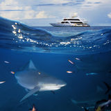 Oceanview  yacht and bull shark. An underwater shot splitted two parts The Bottom One with wild big bull-shark surrounded by fish and shadowy silhouettes of Royalty Free Stock Images