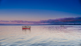 Oceanów ptaki i wschód słońca Zdjęcia Royalty Free