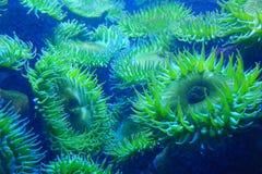 Oceanów słoneczniki Zdjęcie Royalty Free