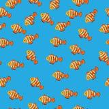 Ocellaris clownfish的例证 库存照片