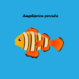 Ocellaris clownfish的例证 库存图片