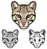 Ocelot Faces. Illustration of ocelot faces in color, grayscale and black and white Royalty Free Stock Image