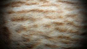Ocelot fur Royalty Free Stock Photo