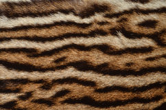 Ocelot fur background. Closeup of ocelot fur pattern background Stock Images