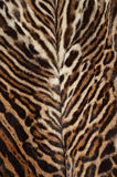 Ocelot fur background. Closeup of ocelot fur pattern background Royalty Free Stock Photos