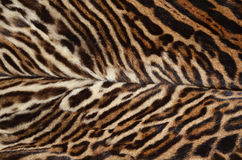 Ocelot fur background. Closeup of ocelot fur pattern background Stock Photography