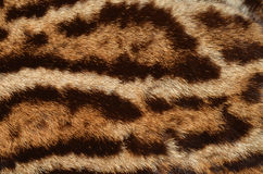 Ocelot fur background Stock Photos