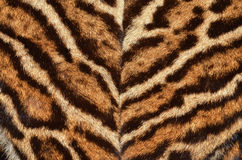 Ocelot fur coat. Closeup of ocelot fur coat Royalty Free Stock Image