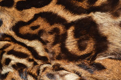 Ocelot fur details Royalty Free Stock Image