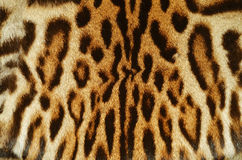 Ocelot fur details Royalty Free Stock Photo