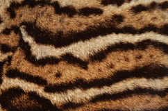 Ocelot fur details Royalty Free Stock Images