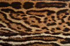Ocelot fur pattern. Closeup of ocelot fur texture Royalty Free Stock Photos