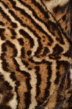 Ocelot fur texture. Closeup of ocelot fur details Royalty Free Stock Photos