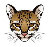 Ocelot. An ink illustration of an ocelot's face Royalty Free Stock Photo