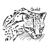 Ocelot`s head - vector illustration sketch hand drawn with black Royalty Free Stock Photos