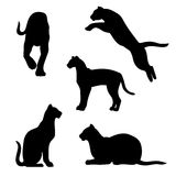 Ocelot set vector. Ocelot set of silhouettes vector stock illustration