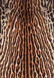 Ocelot skin background. Fur coat of ocelot background Stock Image