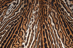 Ocelot skin. Closeup of ocelot skin background texture Royalty Free Stock Photos
