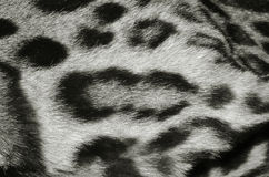 Ocelot skin closeup. Closeup of ocelot fur pattern Royalty Free Stock Photos