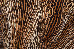 Ocelot skin texture. Skin of ocelot texture background Stock Image