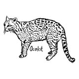 Ocelot - vector illustration sketch hand drawn with black lines, Royalty Free Stock Image