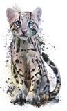 Ocelot. Young ocelot kitten watercolor painting Stock Photo