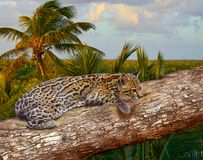 Ocelote Leopardus pardalis Ocelot cat. In central america Jungle photomount Stock Photo