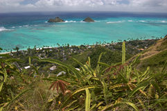Ocen view with cacti from Lanikai, Oahu, Hawaii. Landscape with cacti and ocean view from Lanikai, Oahu, Hawaii Royalty Free Stock Photography