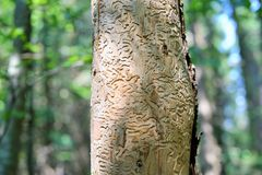 Oceny opuszczać insektem Obrazy Royalty Free