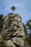 Och ett högväxt träd som överst stiger av en vagga Arkivfoto
