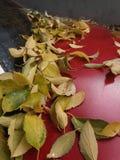 Och hösten ankommer Arkivbild