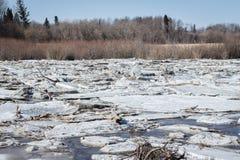 Is och snö sitter fast på floden i vårtid Arkivbild