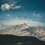 Oche canadesi volanti su un cielo blu sopra le montagne rocciose ed i legni di conifere del lago bow Rocky Mountains, Alberta immagini stock