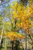 Ochennya i niezwykła natura Fotografia Stock