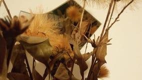 Ocher цветки стоковые изображения rf
