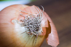 Ocher onion and a colorful background - marco close up Stock Image