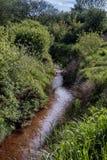 Ocher strumyk w dzikiej naturze, Vester Nebel, Dani Fotografia Royalty Free