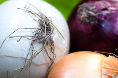 Ocher, white and violet - blue onions detailed texture close up Stock Photography